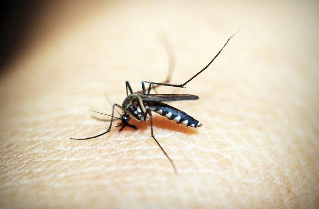 En Afrique, le paludisme de plus en plus résistant aux traitements